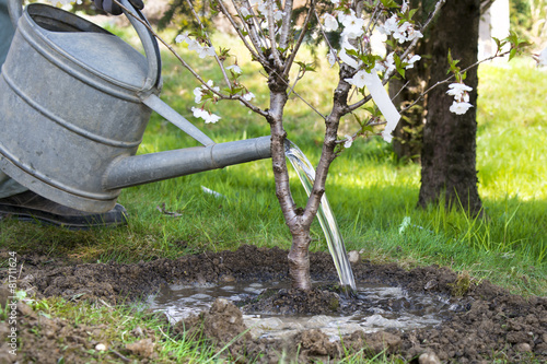 Baum giessen - 81711624