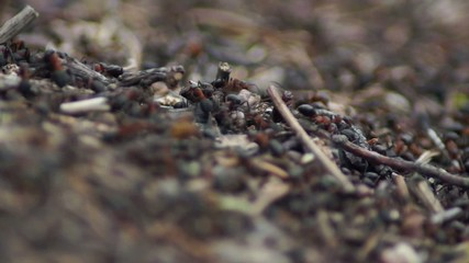 ants crawling over anthills