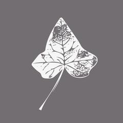 White ivy leaf isolated EPS 10