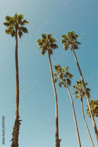 Fotobehang Los Angeles Palm Trees in California