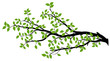 Tree Branch Silhouette, Vector Graphics