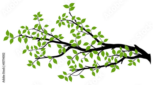 Fototapeta Tree Branch Silhouette, Vector Graphics