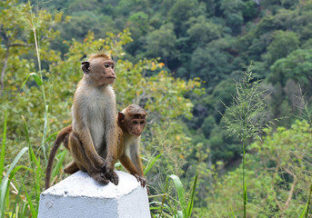 two small monkeys sitting by the road