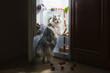 Leinwandbild Motiv cat steals sausage from the refrigerator