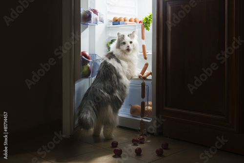 Foto op Plexiglas Koken cat steals sausage from the refrigerator