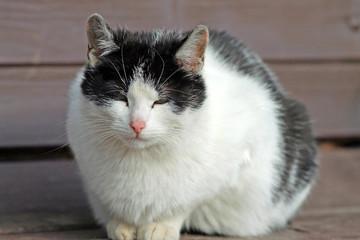 Черно-белый кот сидит