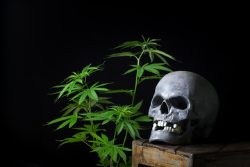 Skull Smoking Cannabis