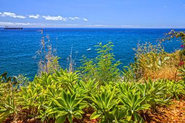 Tropical beach ocean view, Funchal, Madeira