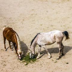 Horses in stable, Goreme, Cappadocia, Turkey