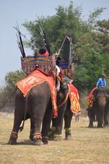 Elefantenkampf