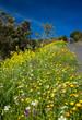 roadside flowers on La Gomera - 81721008