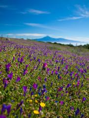 La Gomera, flowering mountain meadows