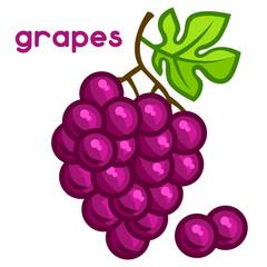 Stylized illustration of fresh grapes on white background