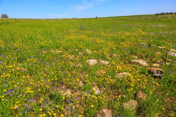 Flat carpet of wild flowers