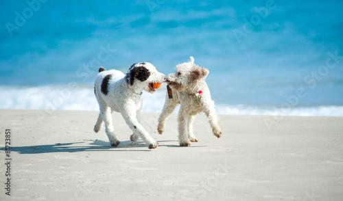 Fototapeten Hunde Spielende Hunde am Strand
