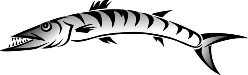 Barracuda Barrakuda Pfeilhecht Vektor