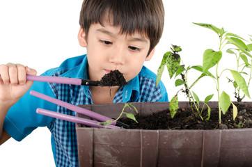 Little boy working with gardening