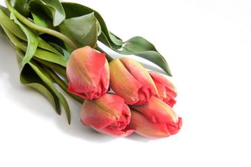 Spring flower  tulips bouquet
