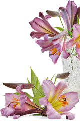 bouquet voilet lily in vase