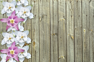 flowers on wood background