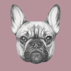 Hand drawn portrait of French Bulldog. Vector