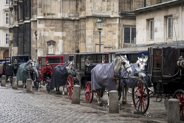 Horse carriages in the city