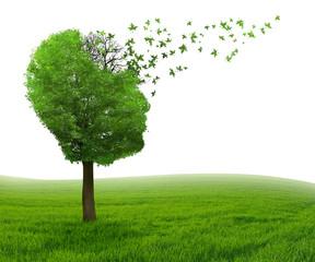 Brain disease memory loss due to Dementia Alzheimer's illness