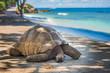 Leinwanddruck Bild - Seychelles giant tortoise