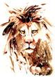 lion - 81733237
