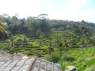 Reisterrasse, stufenförmig auf Hügel, Bali