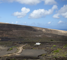 VIneyards in the lava. Lanzarote, Spain.