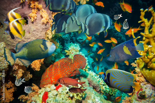 Tropical Fish and Coral Reef - 81735615