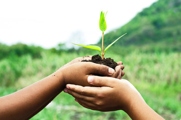 child holding young plant in hands against spring green backgrou
