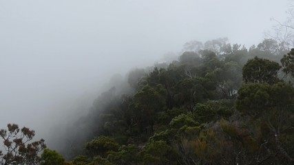 Early Morning from Blue Mountains national park