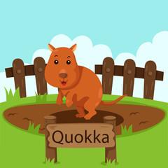 Illustrator of Quokka in the zoo