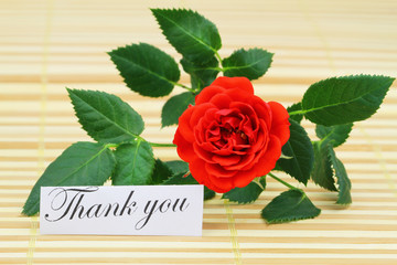 Thank you card with red wild rose