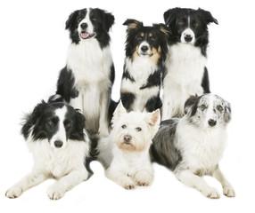 Schwarzweiße Hundegruppe