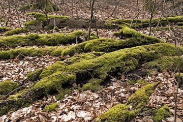 Green Dead Trees