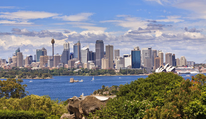 Sydney City Day Panorama from Zoo