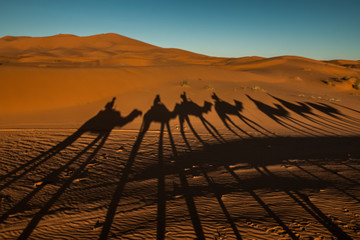 Camel Shadows in Morocco