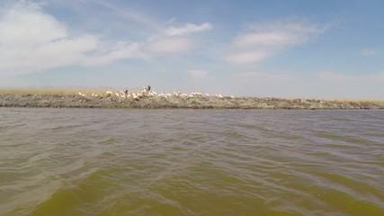 Danube Delta in motion