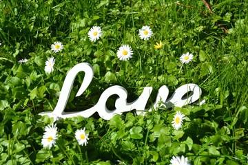 Love  - Blumenwiese