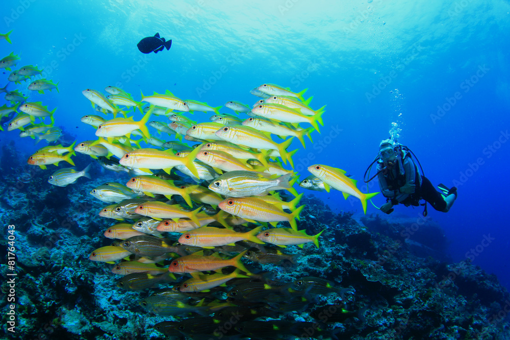 Wall murals scuba diving with fish on coral reef nikkel art for Diving and fishing mural