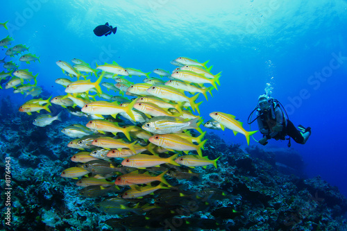 Scuba Diving with fish on coral reef - 81764043