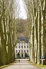 tree- lined avenue