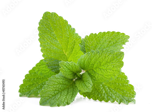 In de dag Kruiden Lemon balm