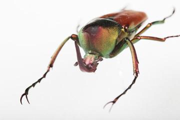 신비한 곤충의 세계