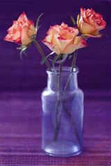 flowers on a purple background .grunge paper background.