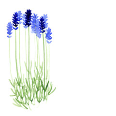 Vector background with blue watercolor lavender