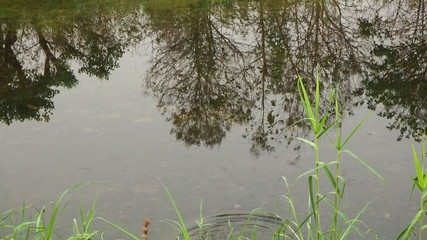 Water surface with reflection and rippled